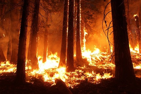 wildfire-1105209_640