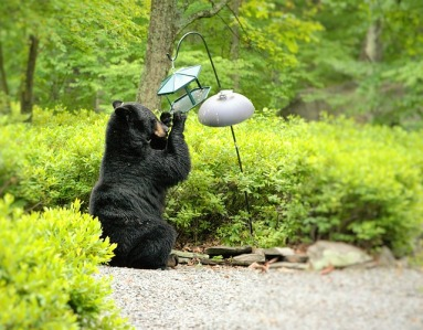 bear-1470446_640